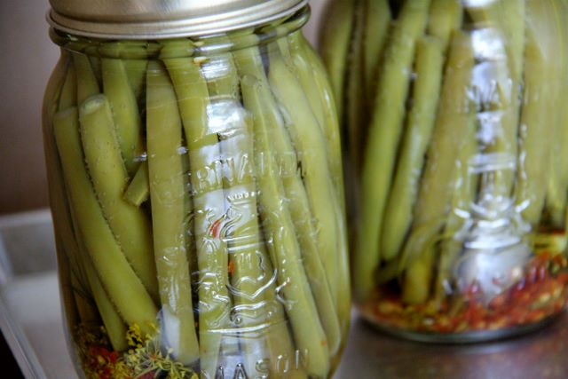 Spicy Pickled Green Beans | My Dad Butters His Bacon