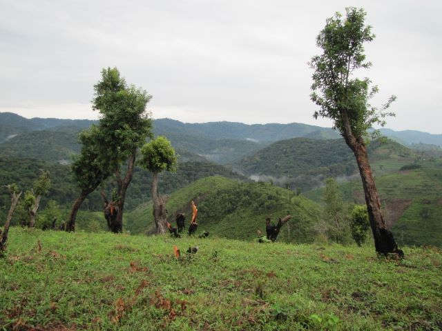 Deep in Bwindi Impenetrable Forest were the family of mountain gorillas