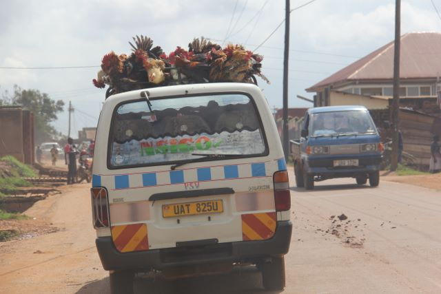 Chickens strapped to the top of a taxi in Kampala